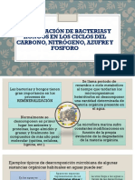 Participación de Bacterias y Hongos en Los Ciclos
