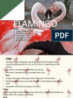 02. Flamingo