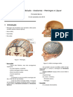 Meninges El Cr