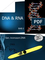 Chapter 2 - DNA & RNA