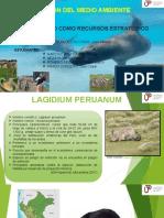Biodiversidad Como Recurso Estrategico .