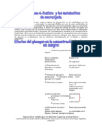 253119459-Glucogeno.pdf