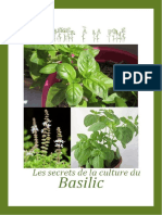 Secrets de Culture Du Basilic