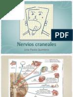 Nervios craneales (1)
