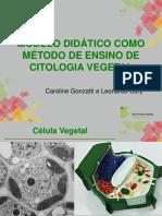 Célula vegetal - ESALQ
