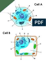 cells a   b