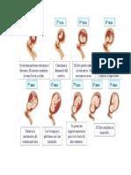 embrionario.docx