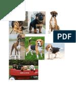 dog breed photos
