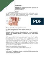 Aparato Reproductor Masculino Partes y Definicion