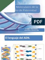 BASES MOLECULARES DE LA PRUEBA DE PATERNIDAD (1) (1).pptx