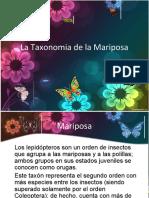 La Taxonomia de La Mariposa
