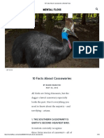 10 Facts About Cassowaries _ Mental Floss