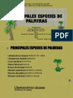 Principales Especies de Palmeras