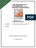 99913091-Estimulacion-Muscular-b-1.doc