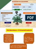 01plagas de Alcachofa