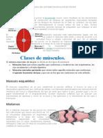 Fisiologìa Del Sistema Muscular en Peces