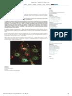 Icewind Dale - Capítulo 6_ El Templo Caído.pdf