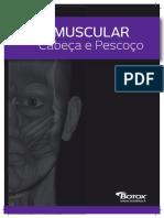 Guia Muscular