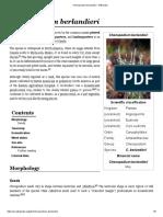 Chenopodium Berlandieri - Wikipedia