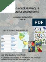 PAPAGAYO DE GUAYAQUIL.pptx