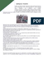Apidiagnoza - Noiembrie.docx