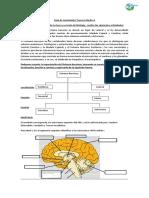 Actividad y Contenido Cerebro y Encefalo