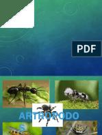 parasito atropodo