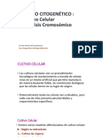 Cultivo Celular 2018