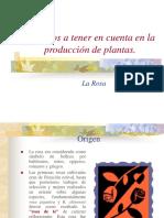 Comercio de Flores (Parte II) (1)