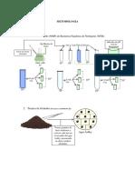 Practica Fijacion Del Nitrogeno Micro Ambiental