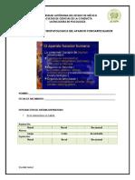 FICHA ANATOMOFISIOPATOLOGICA DEL APARATO FONOARTICULADOR.docx