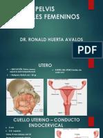 4.-Genitales-femeninos.pptx