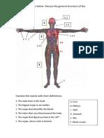 1- General Anatomy