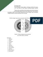 Struktur tumbuhan.docx