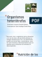 Organismos heterótrofos.pptx