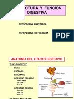 Anatomia del tracto digestivo