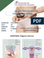 5ta Clase - Patologia Genital Femenina