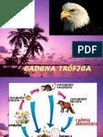 CADENA ALIMENTICIA.pptx