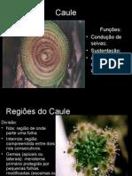 Biologia PPT - Botânica - Caule