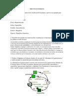 Reino de plantas- Laboratorio.pdf