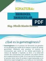 Game to Genesis