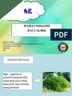 Wahyuningsih (f1c116084) Metabolisme Alga