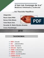 Fasciola Hepatica LUNES