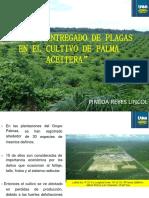 Palma Aceitera Tingo Maria EXPO