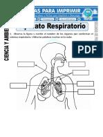 Ficha-de-Aparato-Respiratorio-para-Segundo-de-Primaria.doc