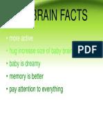 Baby Brain Facts- It