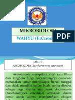 Jamur Ascomycota (Wahyu, f1c116058)