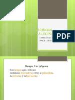 HONGOS ALUCINOGENOS