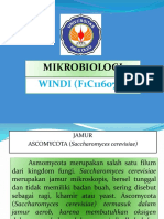 WINDI F1C1 16 070