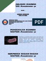 Angga Febrian (F1C115006) Bakteri Pseudomonas Sp